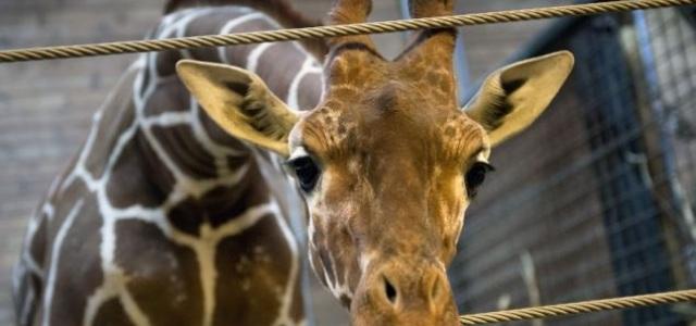 Zoo, bioparchi e bio…porcherie!