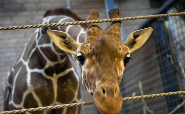 Zoo bioparchi e bio porcherie terzastrada - Porcherie a letto ...