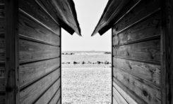 Fotografia e diritto d'autore online: le foto che si scattano da sole